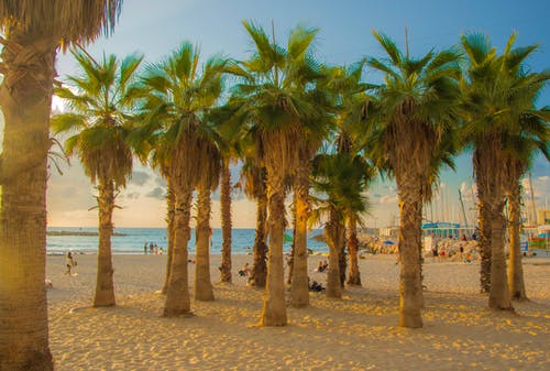 Free stock photo of coast, Israel, palm trees, palmtree