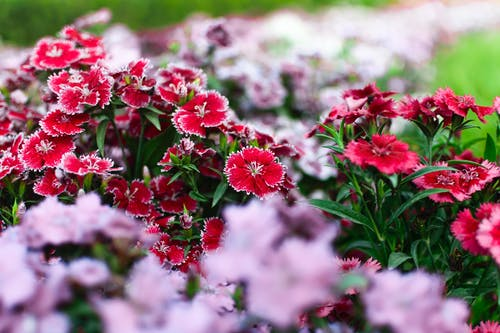 Free stock photo of beautiful flowers, beauty in nature, bunch of flowers, mother nature