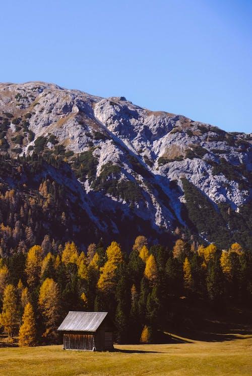 Photos gratuites de à feuilles persistantes, arbres, cabane, clairière