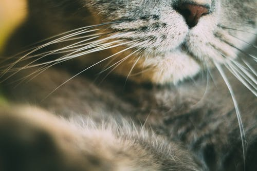 Free stock photo of cat face