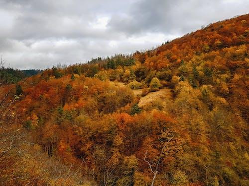 Free stock photo of autumn, autumn colors, autumn leaves, fall