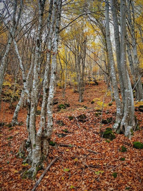 Free stock photo of autumn, autumn color, autumn leaves, fall
