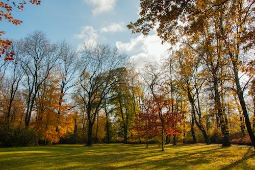 sonbahar renkleri içeren Ücretsiz stok fotoğraf