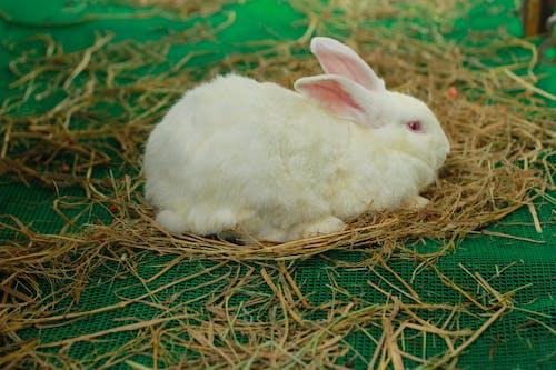 Бесплатное стоковое фото с милый кролик