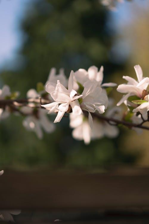 Gratis lagerfoto af blomster, efterår, efterår humør, efterårsblade