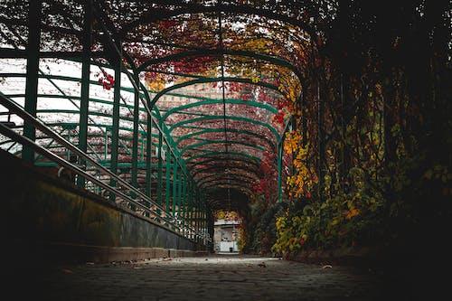 Immagine gratuita di architettura, arte, autunno, bellissimo