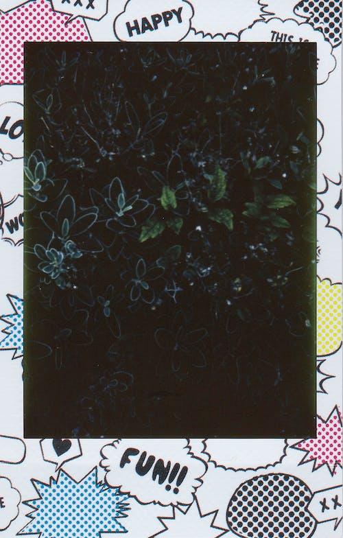 Darmowe zdjęcie z galerii z liście, natychmiastowy film, obraz, polaroid