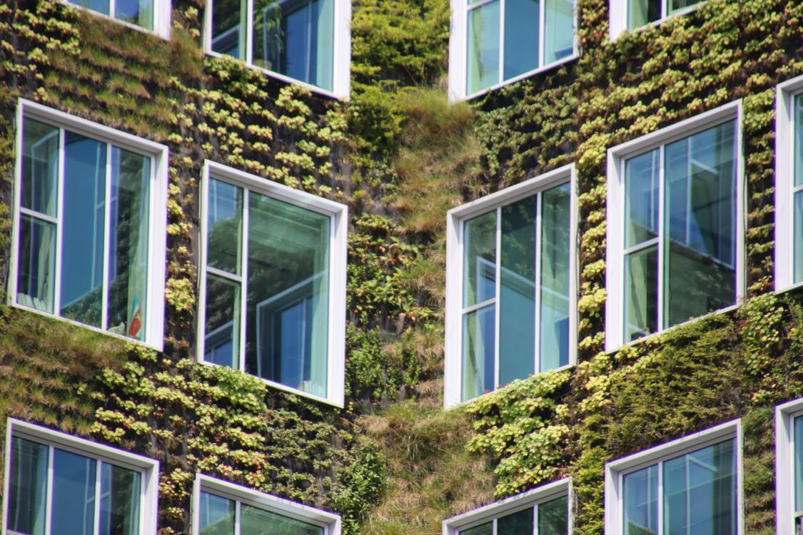 building exterior, green, Vertical garden