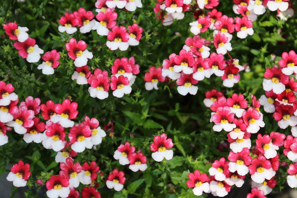 白色和粉红色, 美麗的花朵