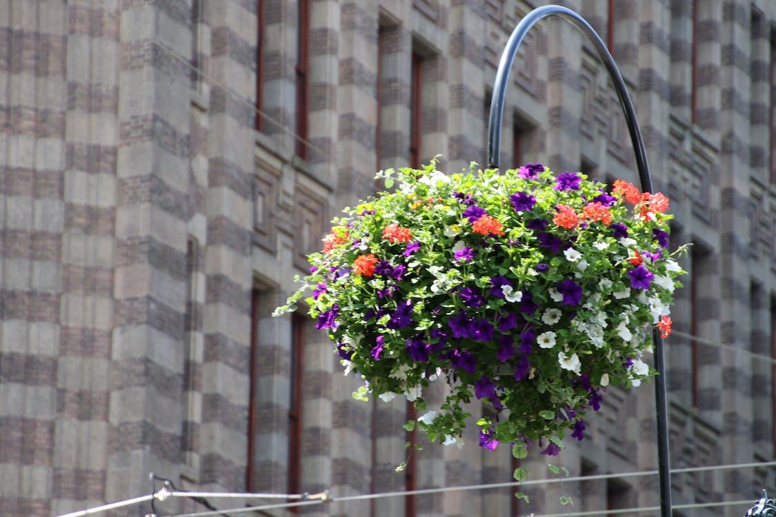beautiful flowers, hanging basket