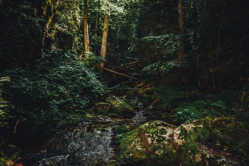Free stock photo of abandoned, beauty of nature, forest, green