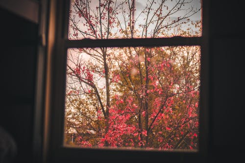 Free stock photo of autumn, autumn mood, bedroom, color