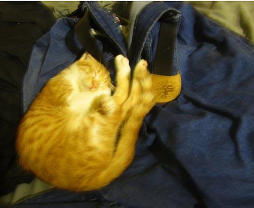 Free stock photo of cat, kitten, kittens, sweets