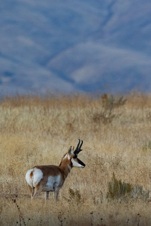 Selective Focus Photo of Brown and White Deer on Grass Field