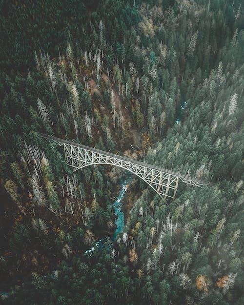 Kostnadsfri bild av arkitektur, bro, dagsljus, dagtid