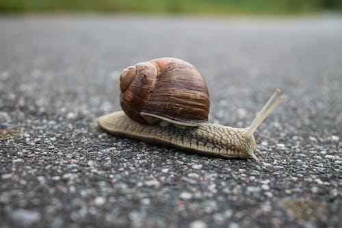 Immagine gratuita di animale, asfalto, conchiglia, gasteropode