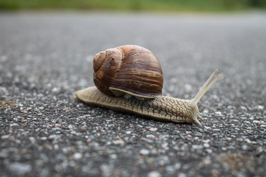 Close-up of Snail on Ground