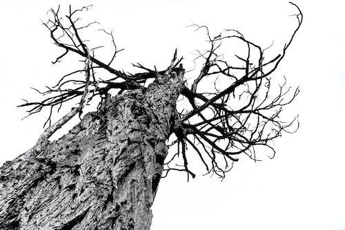 Kostnadsfri bild av bark, dagsljus, gren, lågvinkelfoto