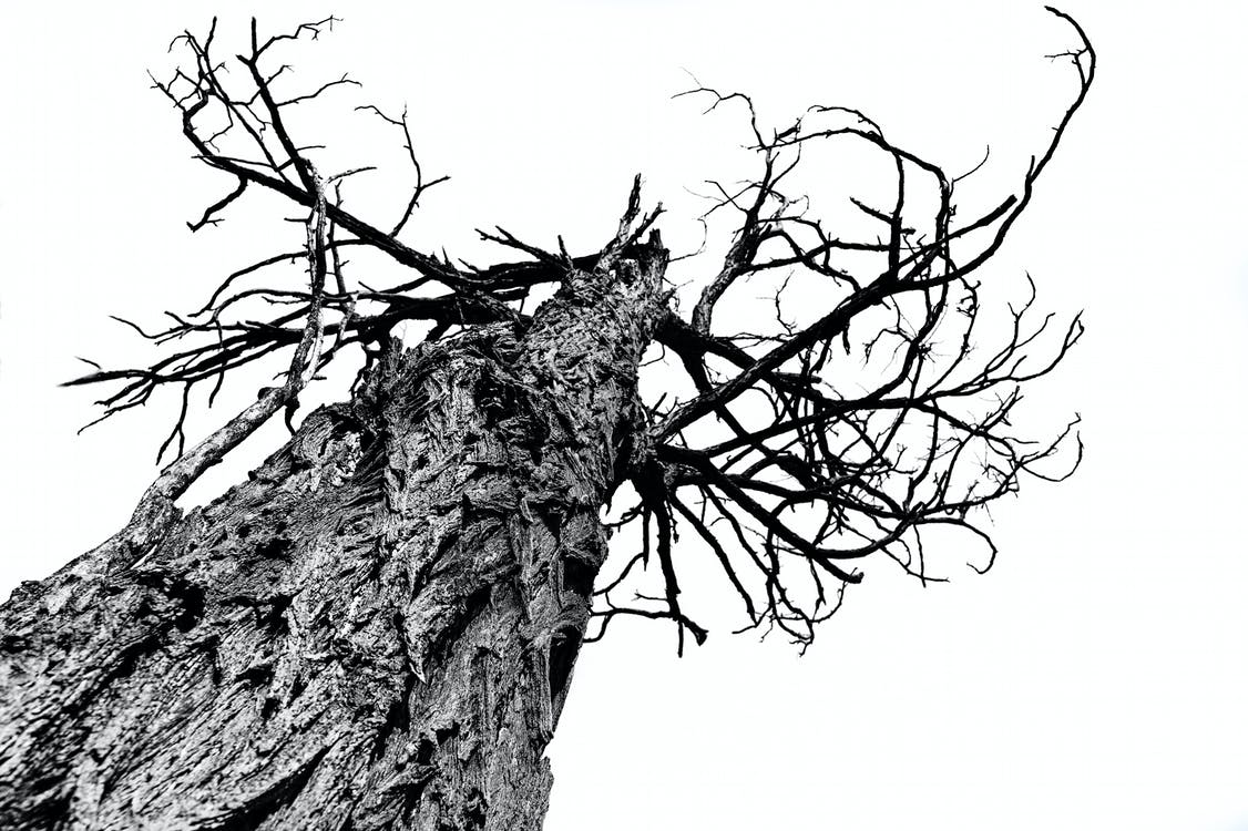 ağaç, ağaç gövdesi, ağaç kabuğu