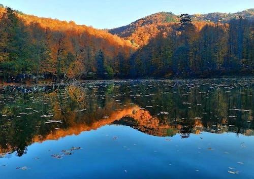 가을, 공기, 나무, 나뭇잎의 무료 스톡 사진