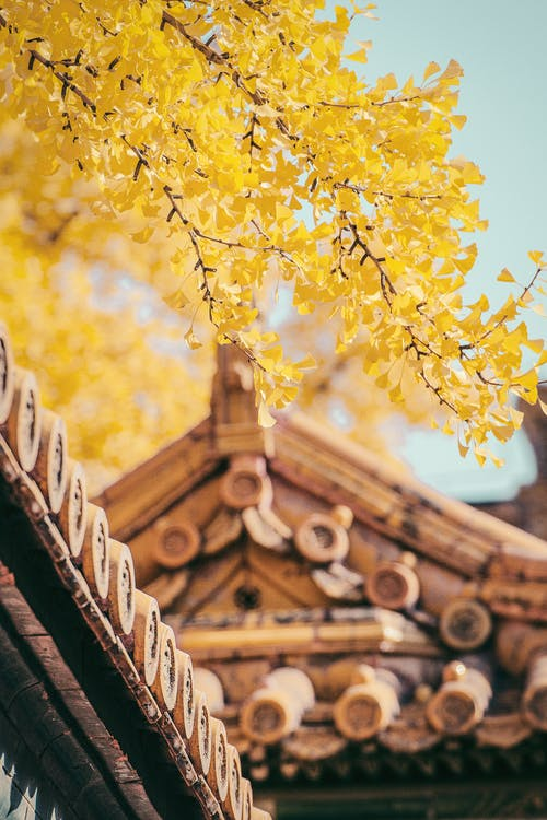 Yellow Trees and Brown Roof