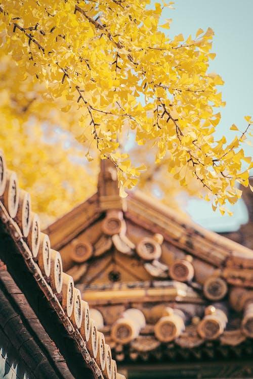 Желтые деревья и коричневая крыша
