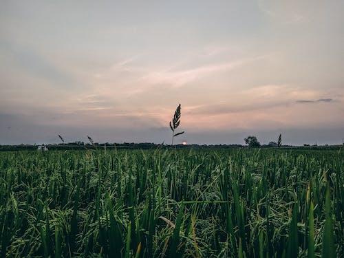 Бесплатное стоковое фото с красивый, обои, пейзаж, пейзажная фотография