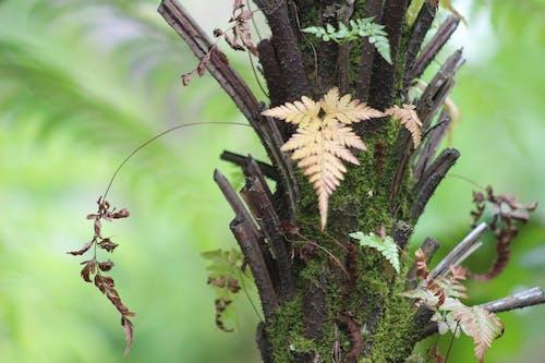 Бесплатное стоковое фото с выскакивая листья
