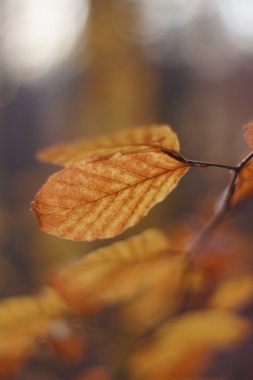 Darmowe zdjęcie z galerii z jesień, jesienne liście, natura, piękno natury
