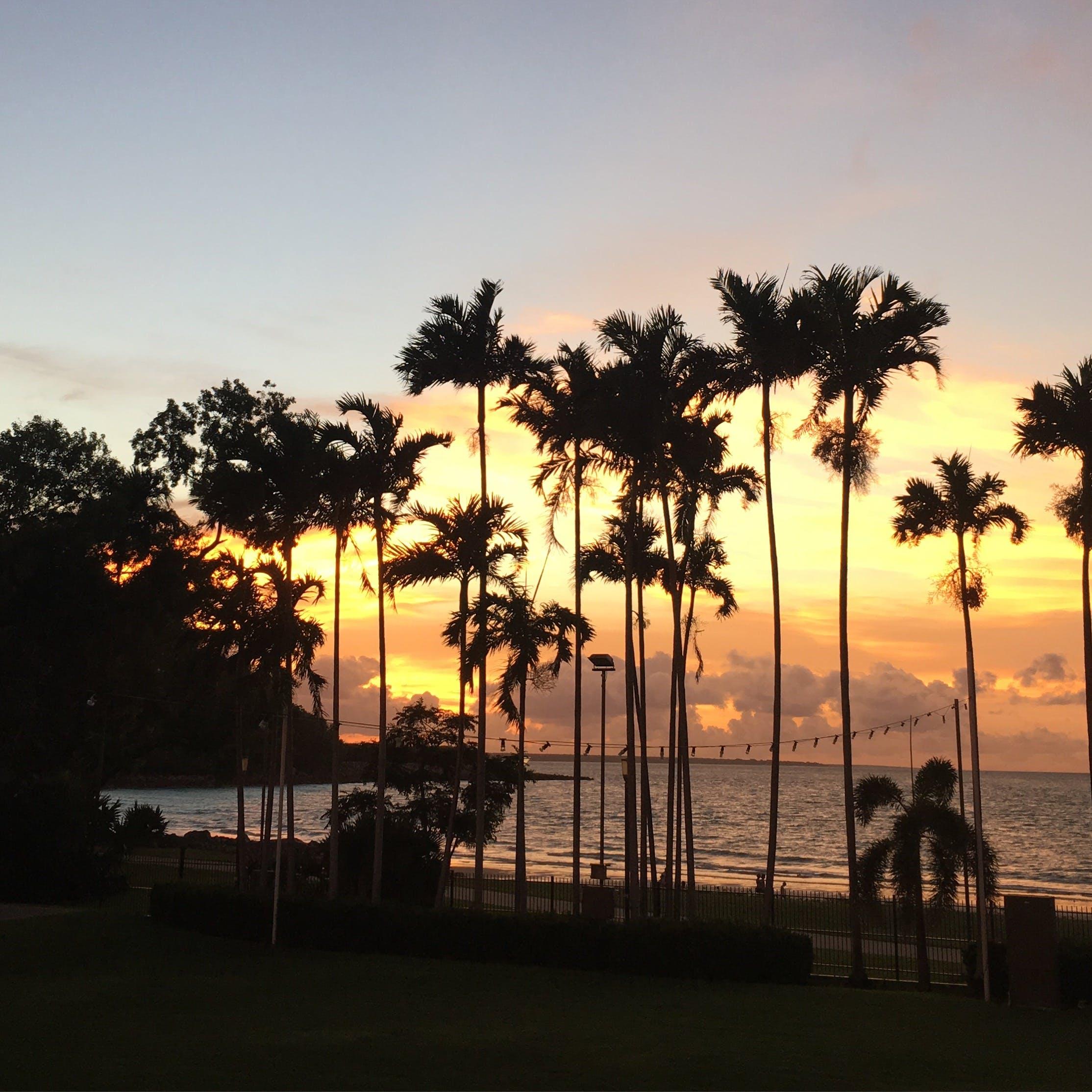 Free stock photo of australia, darwin, northern territory, palm tree