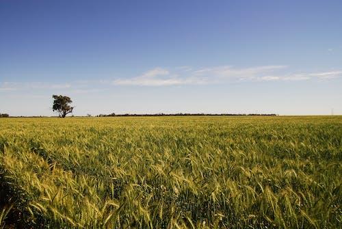 Free stock photo of australia, dubbo, field