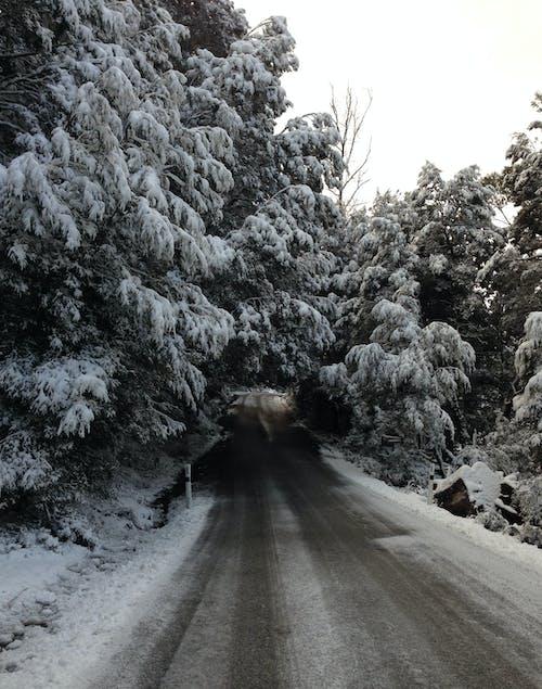 Free stock photo of australia, cradle mountain, road