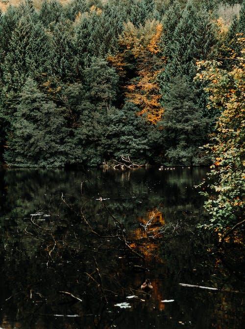 Fotos de stock gratuitas de agua, al aire libre, arboles, bosque