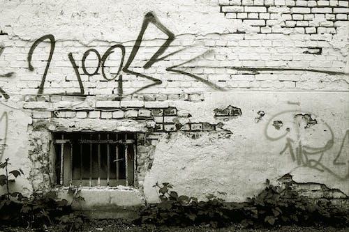 Free stock photo of Analogue, Analogue shot, Backyard Wall, black & white