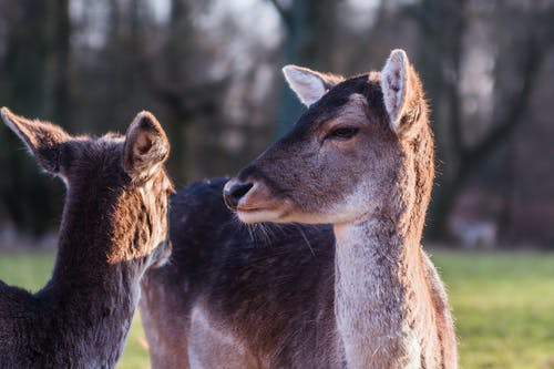 Free stock photo of deer, deers, düsseldorf, Gerresheim