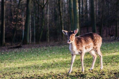 Free stock photo of deer, düsseldorf, Gerresheim, Grafenberg