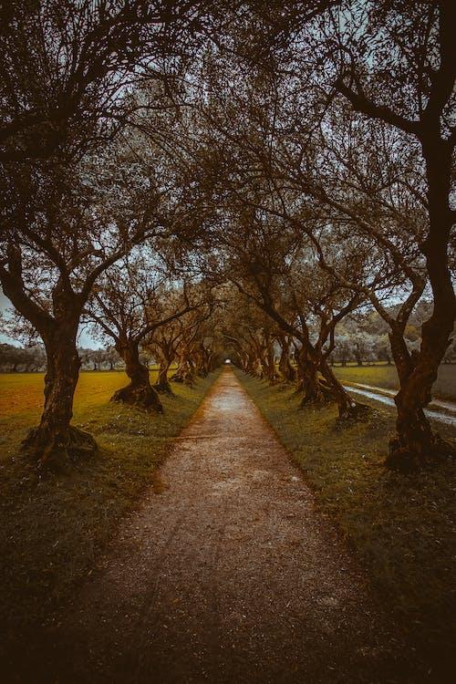 Photos gratuites de arbres, aube, campagne, environnement