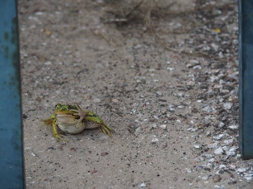 Free stock photo of frog, hand sign