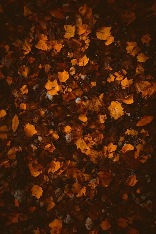 Gratis arkivbilde med bakgrunn, bakken, blader, falle