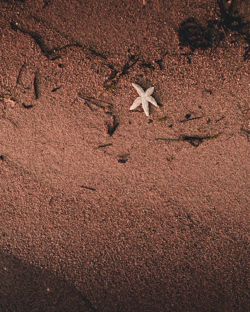 Top View Photo of Starfish on Shore