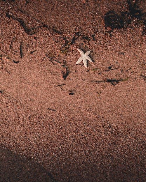 Foto profissional grátis de animal aquático, areia, áspero, beira-mar