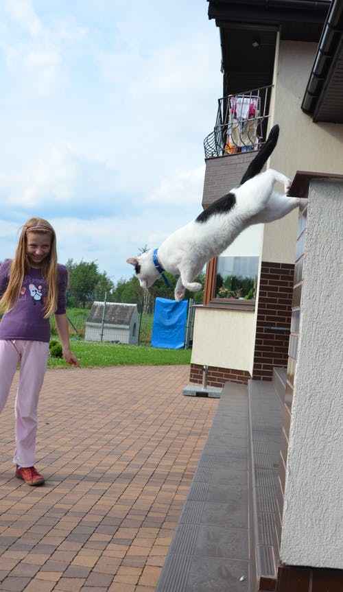 Základová fotografie zdarma na téma dům, fotografování zvířat, kočka, skok