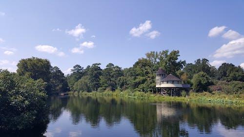 คลังภาพถ่ายฟรี ของ ริมฝั่งแม่น้ำ, สวนพฤกษศาสตร์
