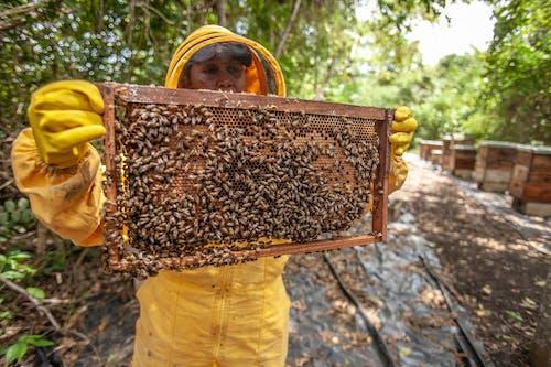 Man Holding Honey Comb