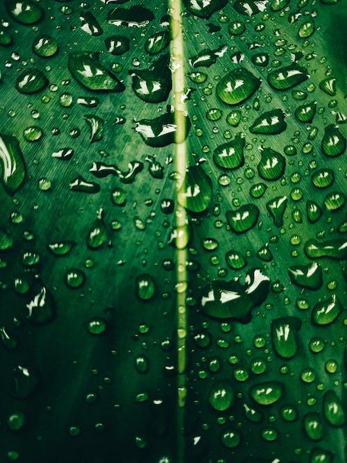 Бесплатное стоковое фото с жидкий, завод, зеленый, зелень