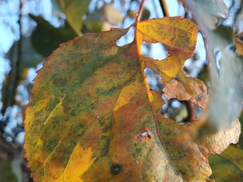 Gratis stockfoto met herfst, omvallen
