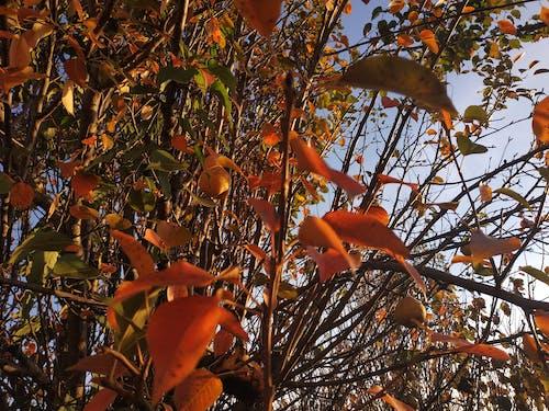 Gratis stockfoto met herfst, herfstkleuren