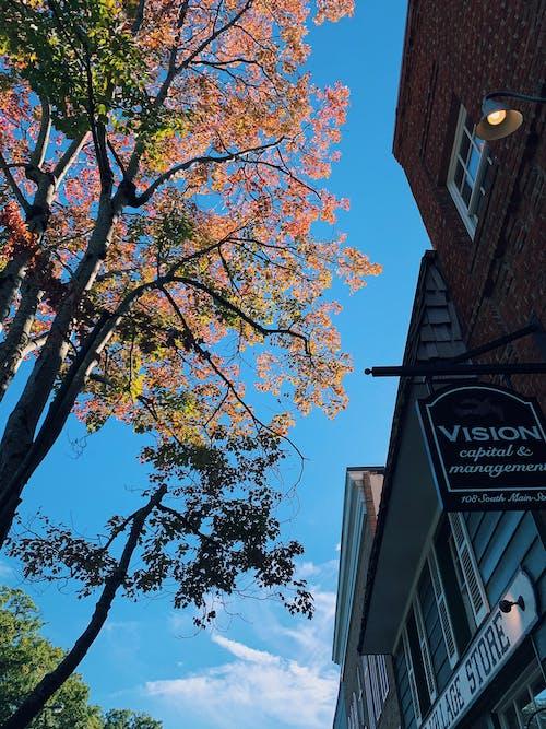 Free stock photo of america, autumn, autumn colors, autumn leaves