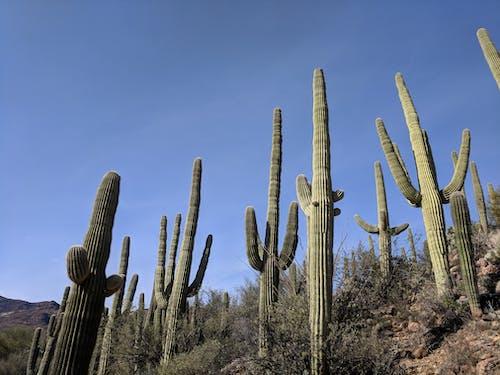 Základová fotografie zdarma na téma kaktus, kameny, nás, obloha