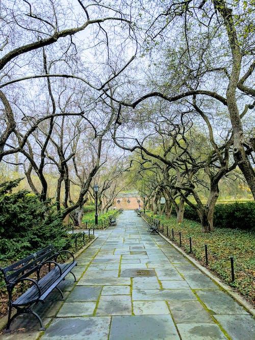 Základová fotografie zdarma na téma central park, lavička, město, město new york
